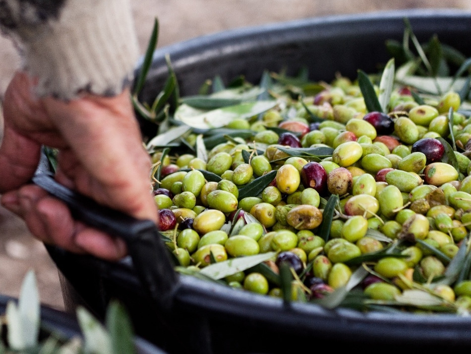 Food Tour from Positano - Olive picking and olive oil tasting