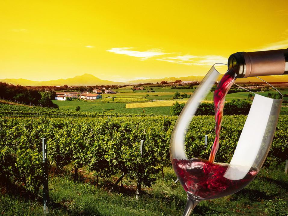 Amalfi Coast wine tasting tour | My Positano Limo